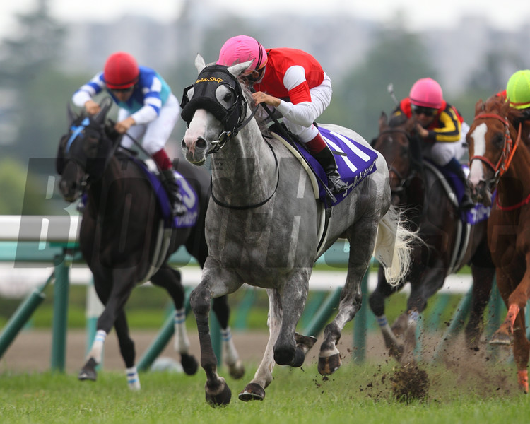 Gold Ship wins the 2014 Takarazuka Kinen.<br /> Masakazu Takahashi