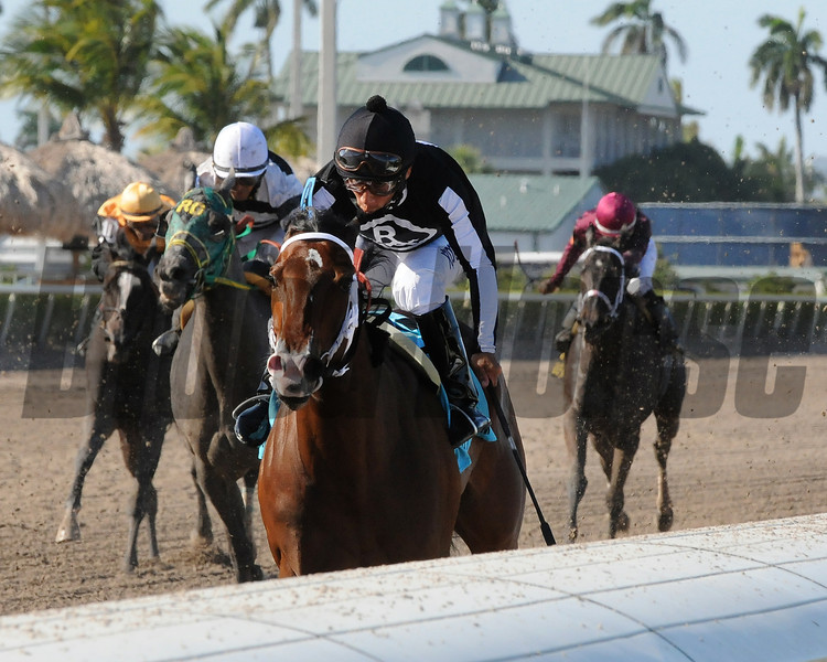 R Free Roll wins the 2014 Hollywood Beach Stakes at Gulfstream Park.<br /> Coglianese Photos/Kenny Martin