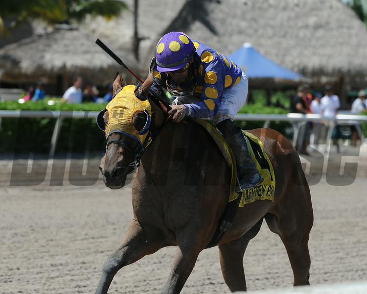 Leap Year Luck wins the 2014 Florida Stallion Desert Vixen Stakes at Gulfstream Park. <br /> Coglianese Photos/Kenny Martin