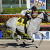 Ullapool wins the 2014 Florida Sunshine Millions Filly and Mare Sprint.<br /> Coglianese Photos/Lauren King