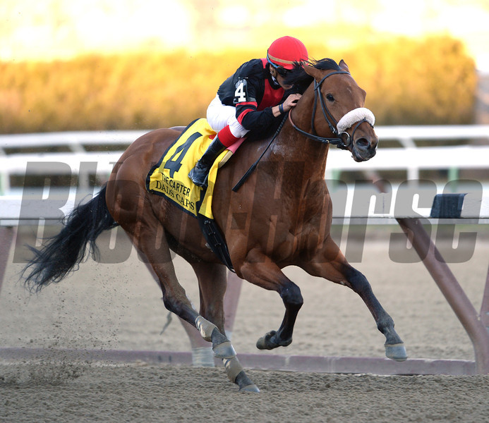 Dads Caps ridden by Luis Contreras wins the 114th running of The Carter at Aqueduct Race Track April 6, 2014.  Photo by Skip Dickstein