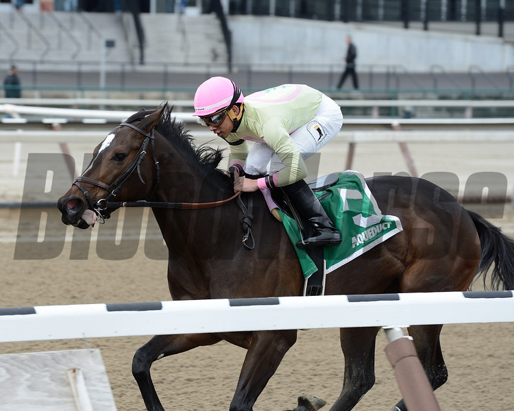 The Lewis Dinner wins the 2014 New York Stallion Series Stakes at Aqueduct.<br /> Coglianese Photos/Joe Labozzetta