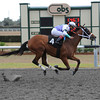 Naughty Holiday wins the 2014 OBS Championship Stakes, Filly Division.<br /> Adam Coglianese/OBS