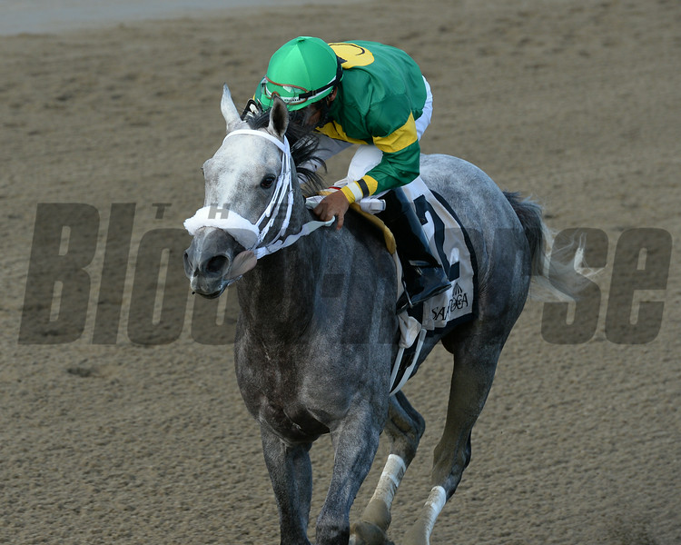 Stonetastic wins the 2014 Prioress at Saratoga. <br /> Coglianese Photos/Joe Labozzetta