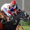 Chief Kitten wins the 2014 Pulpit Stakes at Gulfstream Park West.<br /> Coglianese Photos/Lauren King