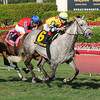 Inimitable Romanee wins the 2014 The Very One at Gulfstream Park.<br /> Coglianese Photos/Lauren King