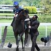 Sweet Reason wins the 2014 TVG Acorn Stakes at Belmont Park.<br /> Coglianese Photos/Courtney Heeney