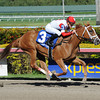 Thank You Marylou wins the Any Limit S. at Gulfstream Park March 9, 2014.<br /> Coglianese Photos/Leslie Martin