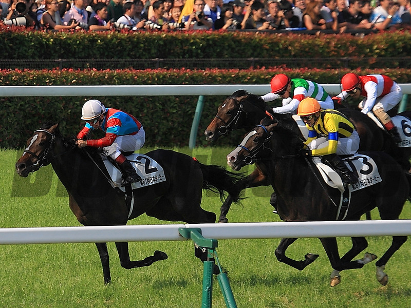 One and Only wins the Japanese Derby.<br /> Naoji Inada Photo