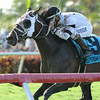 Burn the Mortgage wins the 2014 Eight Miles East Stakes at Gulfstream Park.<br /> Coglianese Photos/Kenny Martin