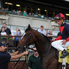 Tonalist wins the 2014 Peter Pan Stakes.<br /> Coglianese Photos