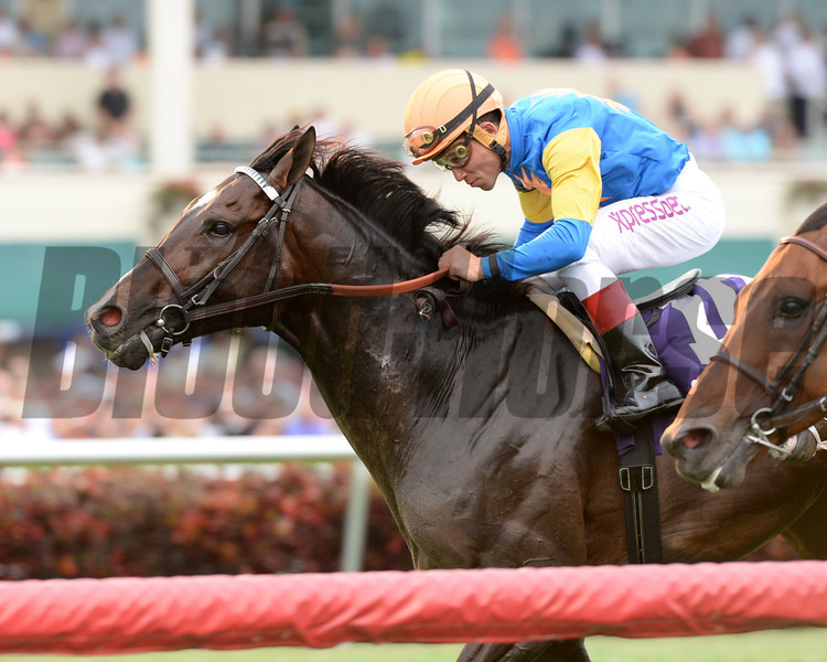 Newsdad wins the 2014 Pan American at Gulfstream Park.<br /> Coglianese Photos/Lauren King