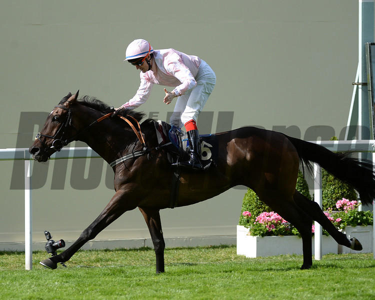 Domination, FM Berry up wins the Ascot Stakes, Royal Ascot, Ascot Race Course, England, 6/17/14 photo by Mathea Kelley