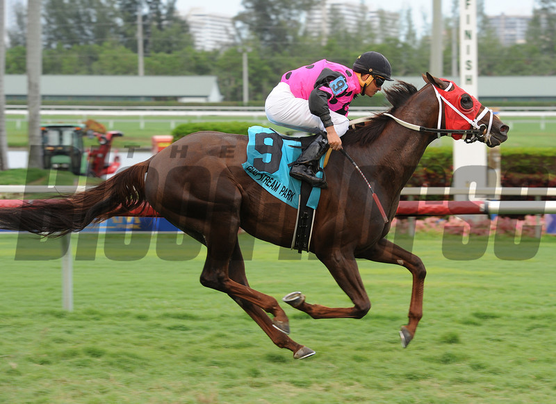 Proud Azteca wins the 2014 English Channel Stakes at Gulfstream Park.<br /> Coglianese Photos/Leslie Martin