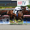 Fast Anna - Maiden Win, April 12, 2014 at Gulfstream Park.<br /> Coglianese Photos/Leslie Martin