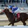 Strapping Groom wins the 2014 Tom Fool at Aqueduct.<br /> Coglianese Photos/Joe Labozzetta