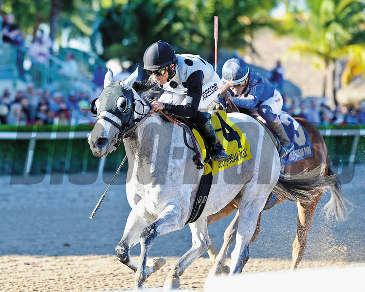 Ullapool captures the Florida Sunshine Millions Filly and Mare Sprint Stakes at Gulfstream Park in Florida. <br /> Coglianese Photo