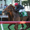 Reload wins the 2014 Canadian Turf Stakes at Gulfstream Park.<br /> Coglianese Photos