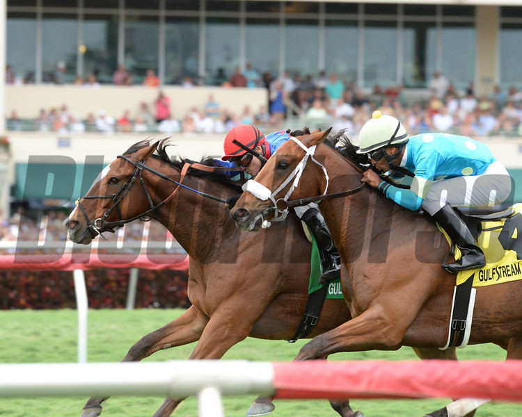 Hey Leroy wins the 2014 Appleton at Gulfstream Park.<br /> Coglianese Photos/Lauren King