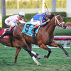 Gala Award wins the 2014 Palm Beach at Gulfstream Park.<br /> Coglianese Photos/Natalie Fawkes