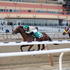 Samraat wins the 2014 Withers Stakes at Aqueduct.<br /> Coglianese Photos