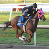 Groupie Doll Works Gulfstream Park 2/2/2014.<br /> Coglianese Photos