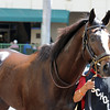 Honor Code preps for the Kentucky Derby at Gulfstream Park March 9, 2014.<br /> Cogilanese Photos