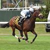 Legendary wins the 2014 Knickerbocker Stakes at Belmont Park.<br /> Coglianese Photos