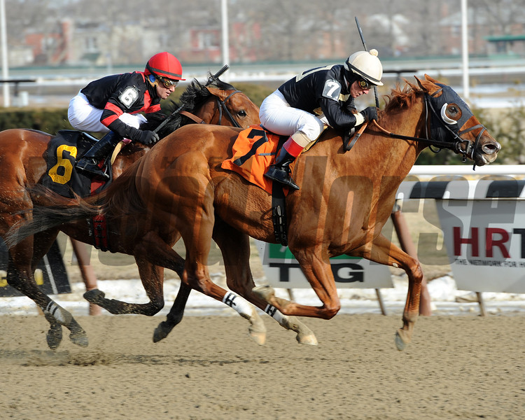 Candyman E wins the 2014 Toboggan at Aqueduct.<br /> Coglianese Photos