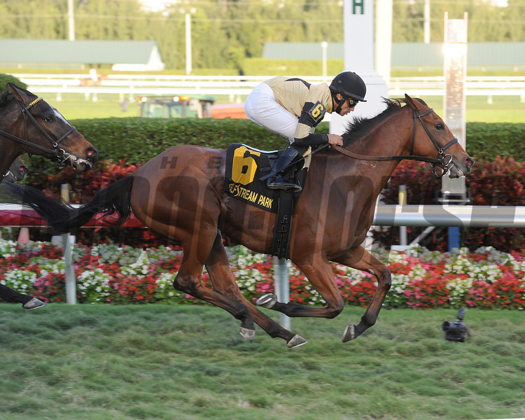 Twilight Eclipse wins the 2014 Mac Diarmida Stakes at Gulfstream Park. <br /> Coglianese Photos/Leslie Martin