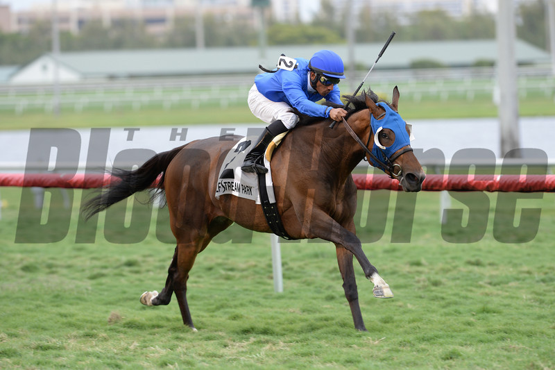 Anjaz comes home strong to win the Orchid Stakes at Gulfstream Park.<br /> Coglianese Photo