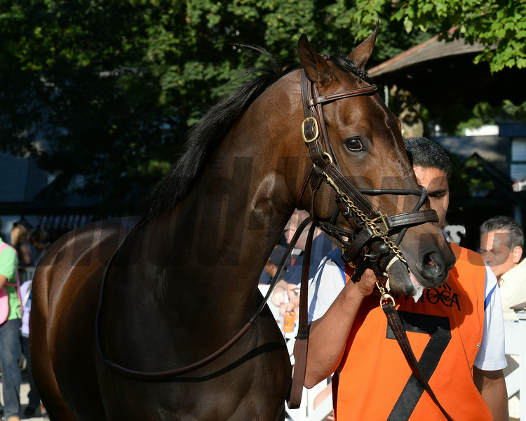 So Lonesome wins the Albany Stakes 8/24/2014.<br /> Coglianese Photos