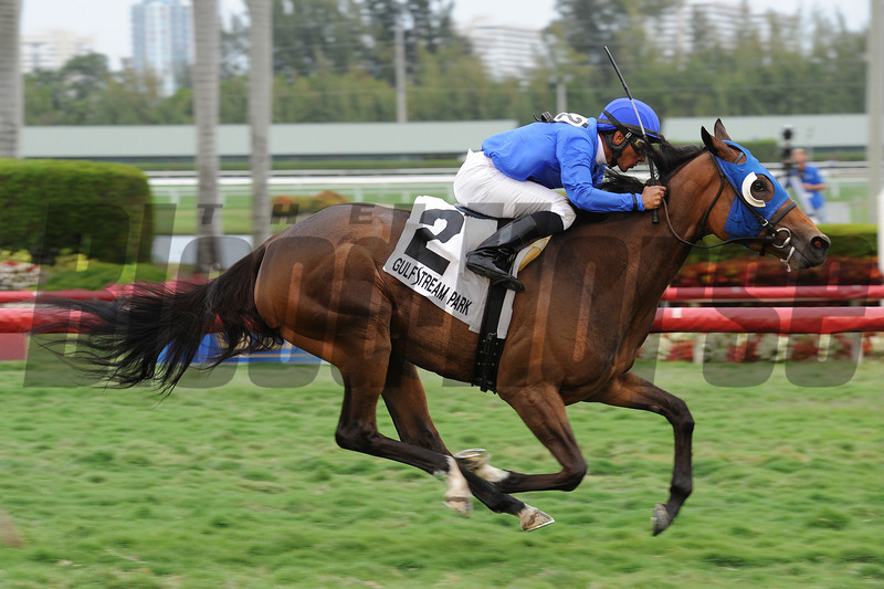 Anjaz wins the 2014 Orchid Stakes.<br /> Coglianese Photos/Leslie Martin