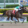 Sweet Whiskey wins the 2014 Old Hat Stakes.<br /> Coglianese Photos/Leslie Martin