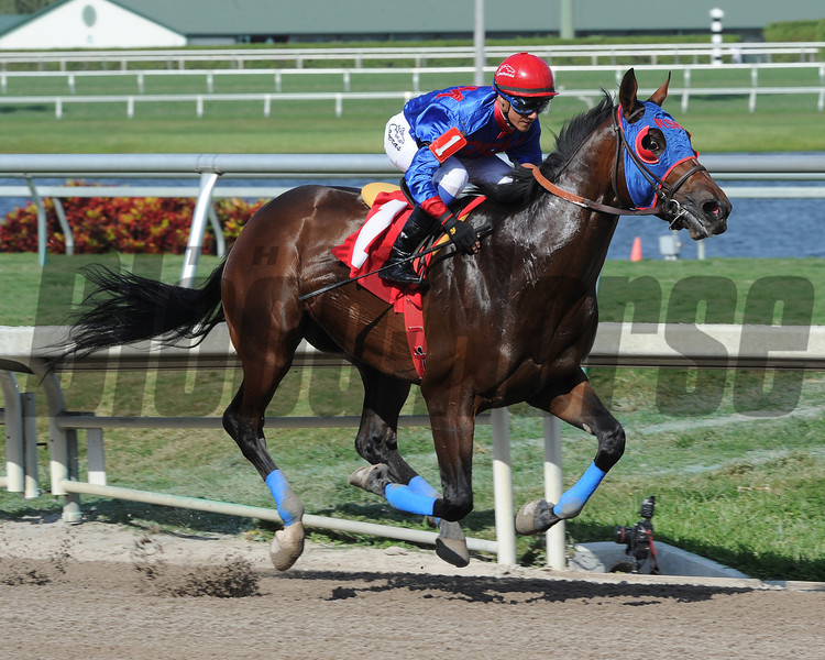 Social Inclusion defeats Honor Code and wins an allowance race at Gulfstream Park on March 12, 2014. Photo credit: Coglianese Photos/Lauren King.