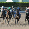 Spot wins the 2014 Swale Stakes at Gulfstream Park.<br /> Coglianese Photos/Shannon Spies