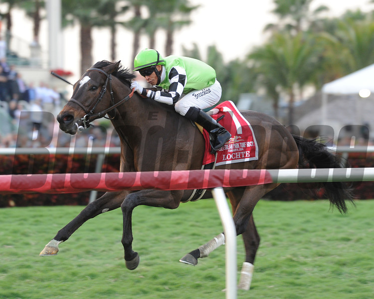 Locthe wins the Gulfstream Park Turf Handicap 2/9/2014.<br /> Coglianese Photos/Lauren King