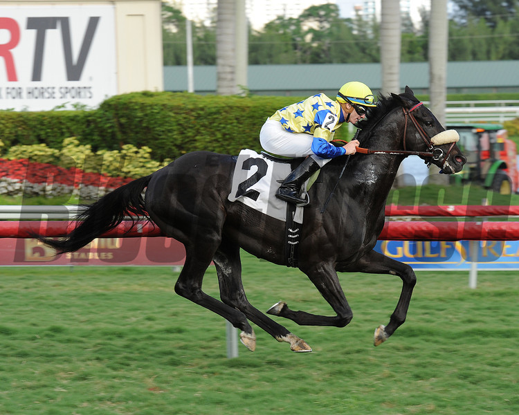 Ay No Digas - Maiden Win, January 10, 2014.<br /> Coglianese Photos/Leslie Martin