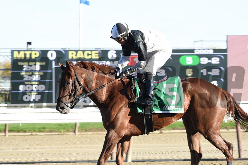 Jacaranda wins the Tempted Stakes Nov. 2, 2014.<br /> Coglianese Photos