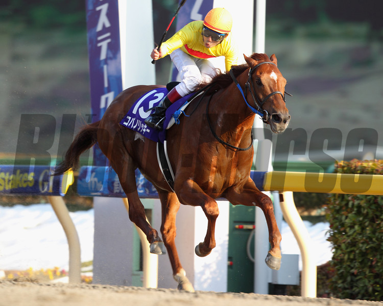 Copano Rickey wins the February Stakes in Japan. 2/23/2014<br /> Masakazu Takahashi Photo