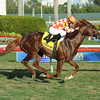 Wicked Tune wins the 2014 Gulfstream Park Turf Sprint.<br /> Coglianese Photos/Leslie Martin