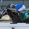 Mamdooha wins the 2014 Cicada at Aqueduct.<br /> Coglianese Photos