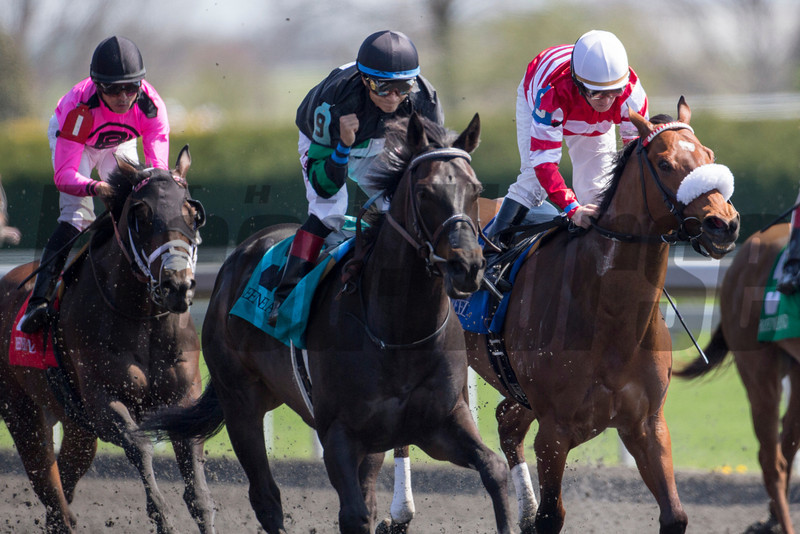 Occasional View wins the 2014 Commonwealth Stakes at Keeneland.<br /> Mark Mahan Photo