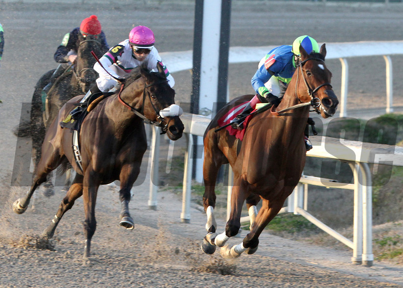 Delaunay, right, with jockey Rosie Napravnik aboard, turns for home in the Fair Grounds stretch to go on to win the F.W. Gaudin Memorial Stakes, Saturday, Janaury 25, 2014.<br /> Alexander Barkoff / Hodges Photography