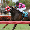 Proud Azteca wins the 2014 English Channel Stakes at Gulfstream Park.<br /> Coglianese Photos/Kenny Martin