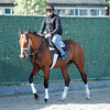 Micromanage at Belmont Park 6/1/2014<br /> Coglianese Photos/Susie Raisher