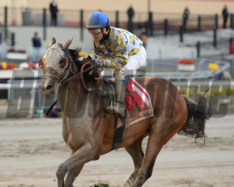 Salutos Amigos wins the 2014 Fall Highweight Handicap.<br /> Coglianese Photos/Joe Labozzetta