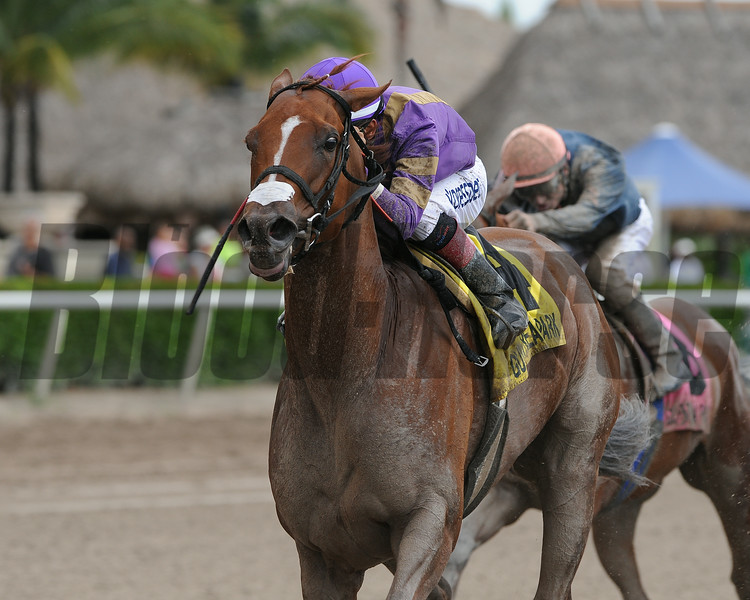 Heart Stealer wins the 2014 Paseana Stakes at Gulfstream Park.<br /> Coglianese Photos/Kenny Martin