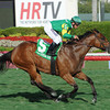 Believe In Charlie wins the Ladies Turf Sprint Stakes at Gulfstream Park.<br /> Coglianese Photos/Natalie Fawkes