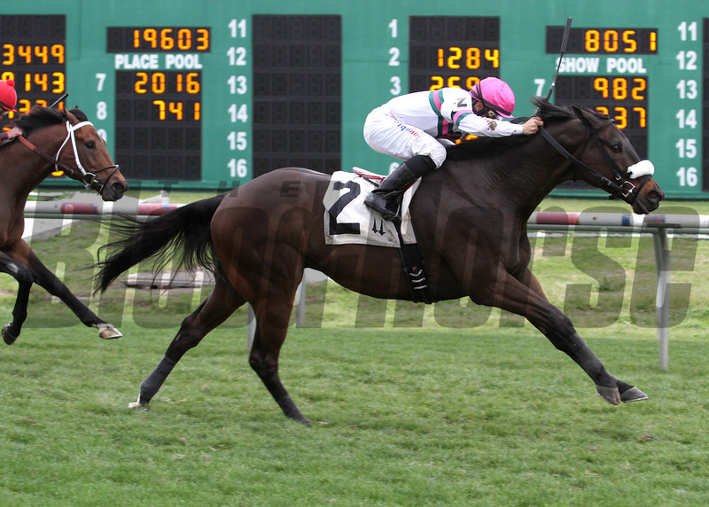 Brittlyn Stable's Gantry, wins the 27th running of the Colonel Power Stakes, Saturday, March 15, 2014 at the Fair Grounds Race Course and Slots in New Orleans, LA. Trained by Ron Faucheux, Gantry won the abt 5 ½  Furlongs turf sprint in 1:03.99. Riichard Eramia was the winning jockey. Positive Side was 2nd and Marchman ran 3rd. <br /> Photo by Lou Hodges, Jr. / Hodges Photogrpahy